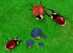 甲蟲-養甲蟲